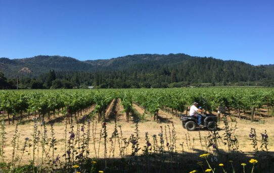 Napa Valley itinerary for wine-lovers (Part 1)